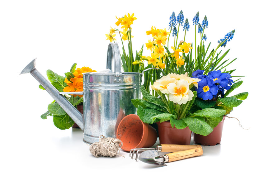 36879668 - spring flowers with gardening tools isolated on white background